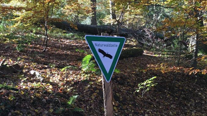 Naturwaldzelle am Nonnenstromberg